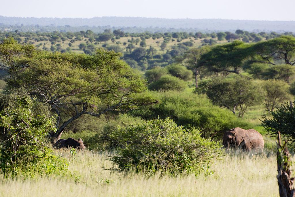 Yeah, more elephants