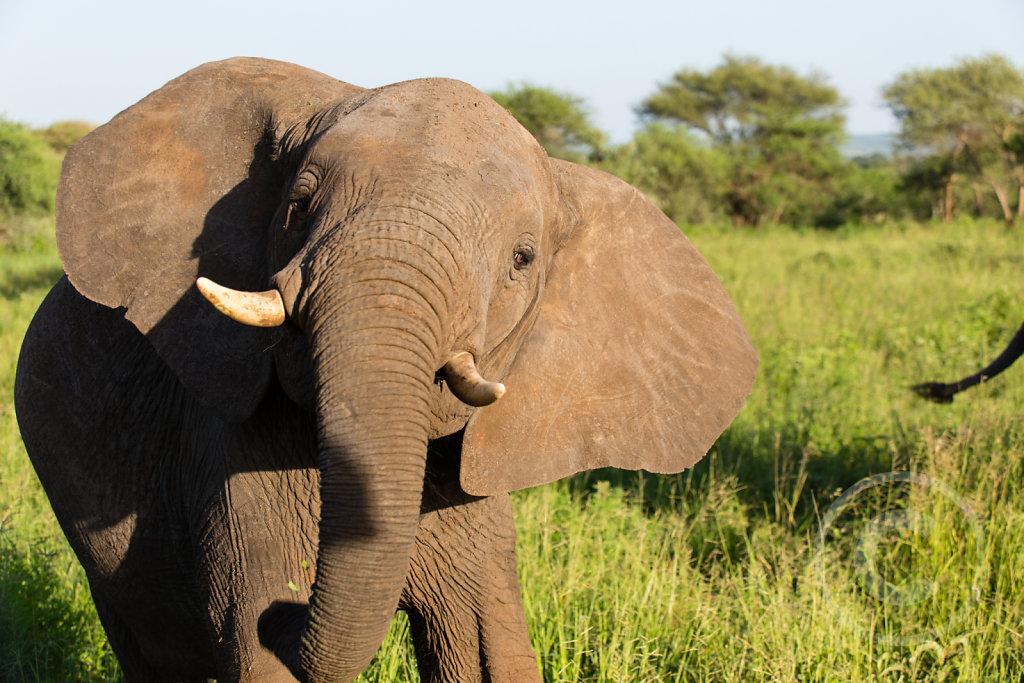 Elephant got angry