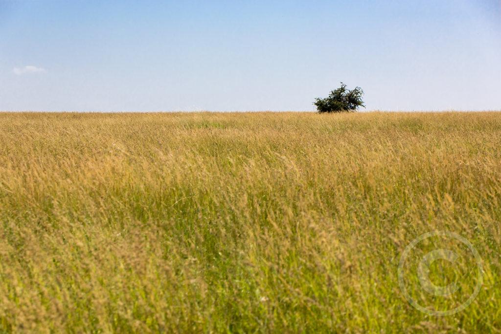 Vast graslands of Serengeti