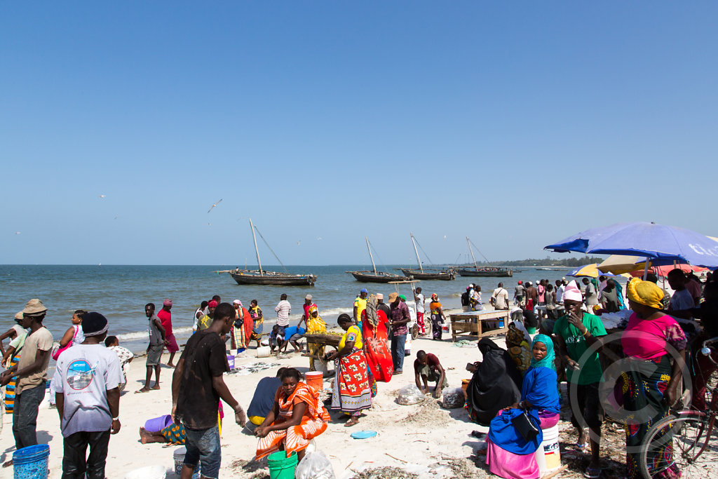 Fish market on the beach in bagamoyo